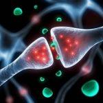 Représentation d'une jonction synaptique  permettant la transmission des messages neuronaux ou neuromusculaires. © Inserm