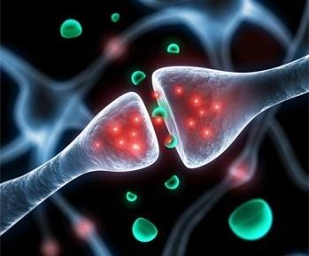 Le chlorure de lithium pour restaurer la transmission neuromusculaire dans les myasthénies congénitales