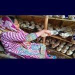 Cultiver des champignons à domicile, permet aux personnes à mobilité réduite du Bangladesh d'acquérir une indépendance © DR