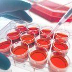 Obtenues par une équipe australienne, des cellules multipotentes induites (iMC) peuvent régénérer n'importe quel tissu. © Andrew Brookes - Corbis