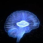 Un tiers des traumatismes crâniens légers ou modérés génère des séquelles neurologiques pouvant durer quelques  jours, semaines ou se transformer en handicap.