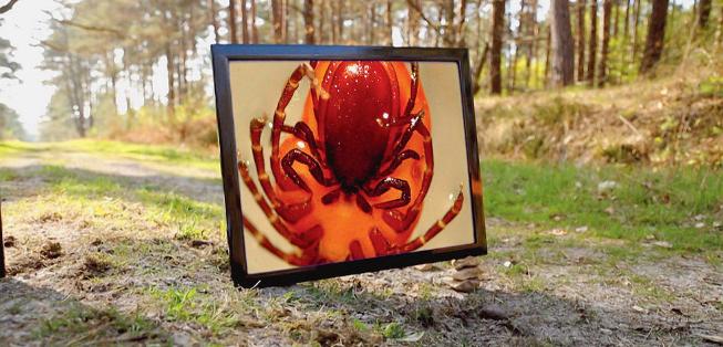 Maladie de Lyme : bombe à retardement ou psychose collective ?